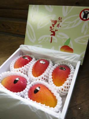 完熟アップルマンゴー マンゴーの花!25年目を迎える今年も惜しまぬ手間ひまで花芽を全て吊って育てます!_a0254656_18272471.jpg