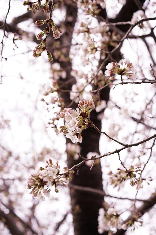 桜パトロール_a0292060_21142547.jpg