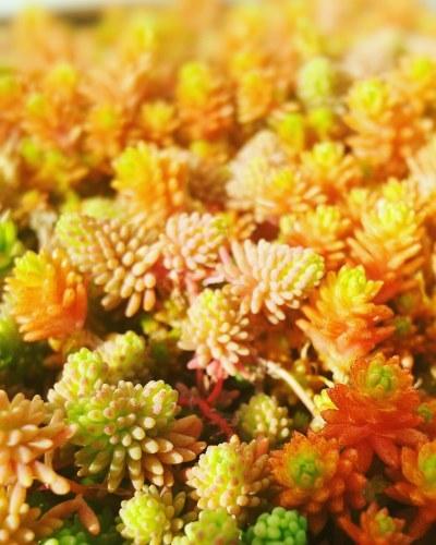 春_c0341260_20090391.jpg