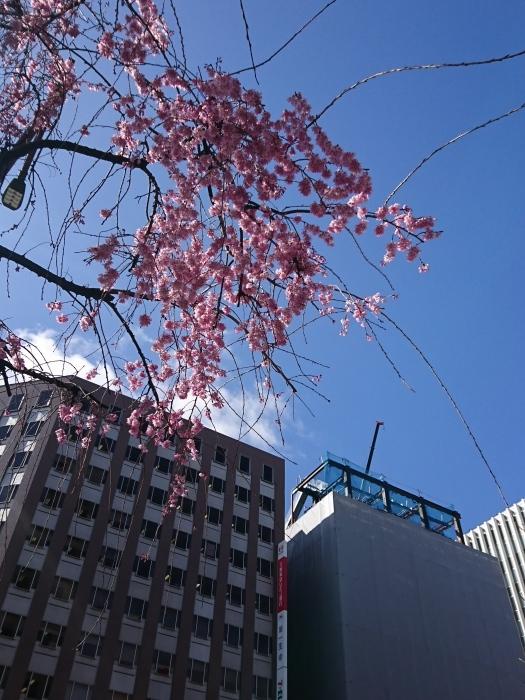 春です。ショートです。_a0272765_17171429.jpg