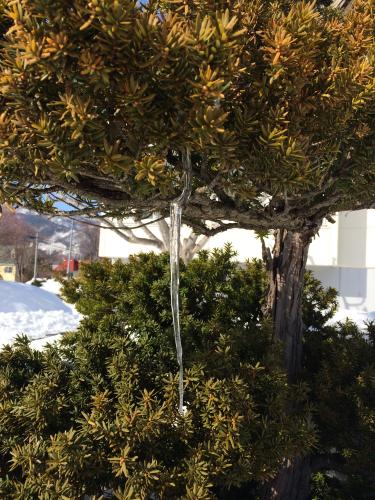 雪どけつららのおしゃべり_c0220170_16550922.jpg