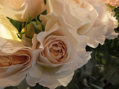 オークリーフ(桜と市川さんの薔薇)_f0049672_12110422.jpg