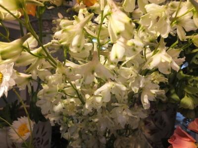 オークリーフ(桜と市川さんの薔薇)_f0049672_12114277.jpg