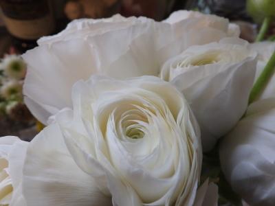 オークリーフ(桜と市川さんの薔薇)_f0049672_12125062.jpg