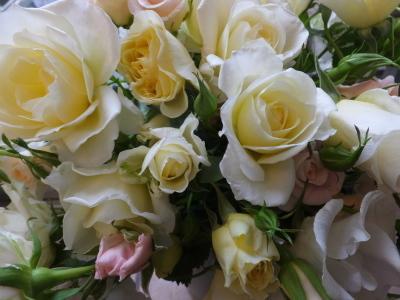 オークリーフ(桜と市川さんの薔薇)_f0049672_12132934.jpg