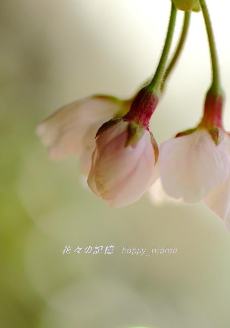 桜求めて ぶらぶら散歩・・_c0357781_20201630.jpg