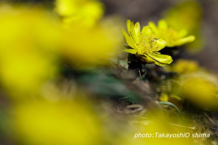 春の装い_f0361287_03585741.jpg