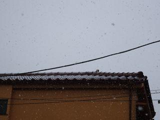 まさかの雪??_c0223192_20392545.jpg