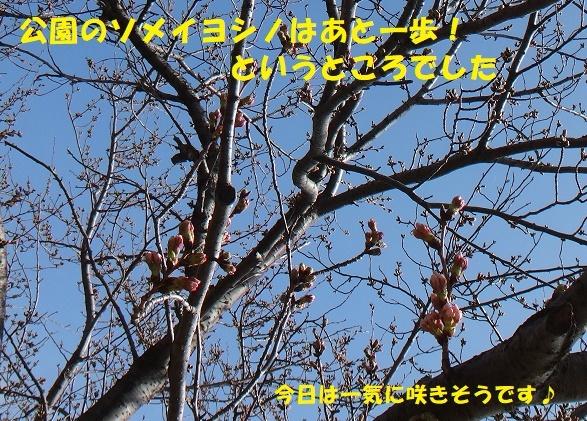 f0121712_08382491.jpg