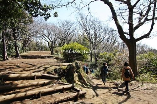 第24回マザーウルフ遠足 鎌倉天園レポート_e0191026_17420752.jpg