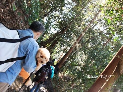 第24回マザーウルフ遠足 鎌倉天園レポート_e0191026_17543295.jpg