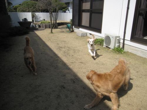 ゴーちゃんとあっちゃんとジョジョさん_e0350927_10005145.jpg