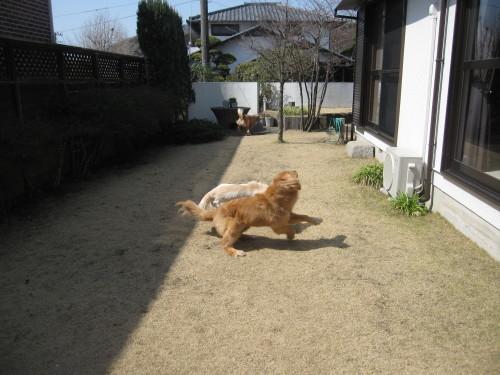 ゴーちゃんとあっちゃんとジョジョさん_e0350927_10011076.jpg