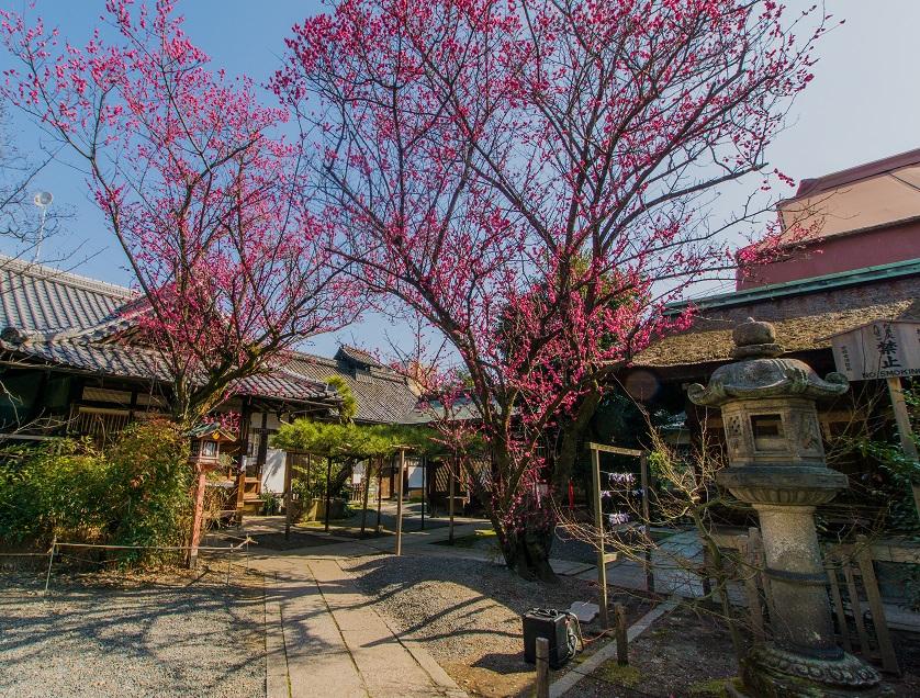 下御霊神社の梅_e0363038_20305611.jpg