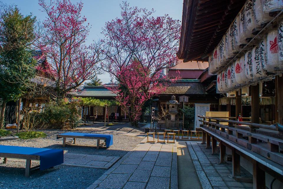 下御霊神社の梅_e0363038_20311990.jpg