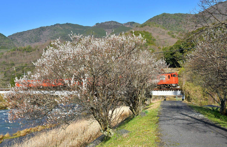 三篠川提梅林_a0251146_14201905.jpg