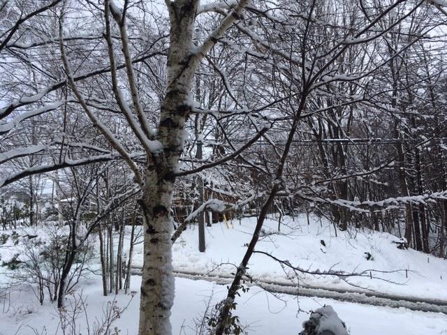 春の雪は重い!_f0019247_016771.jpg