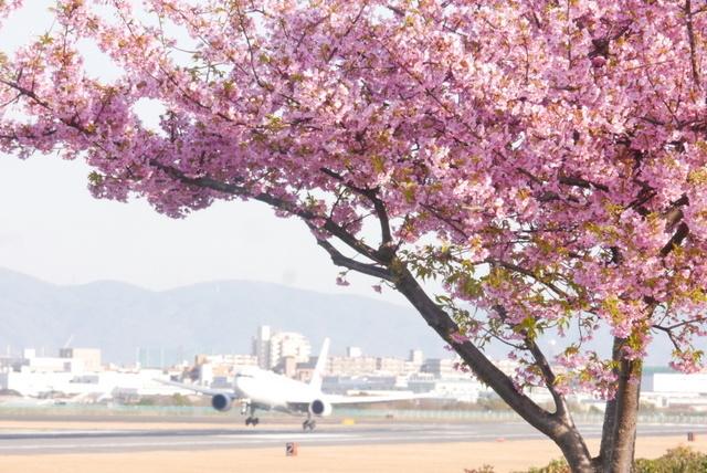 河津桜と飛行機_b0358575_19202776.jpg