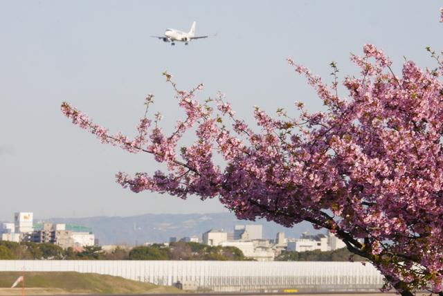 河津桜と飛行機_b0358575_19204897.jpg