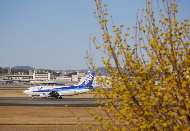 河津桜と飛行機_b0358575_19482788.jpg