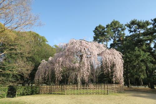 桜_f0028791_16513752.jpg