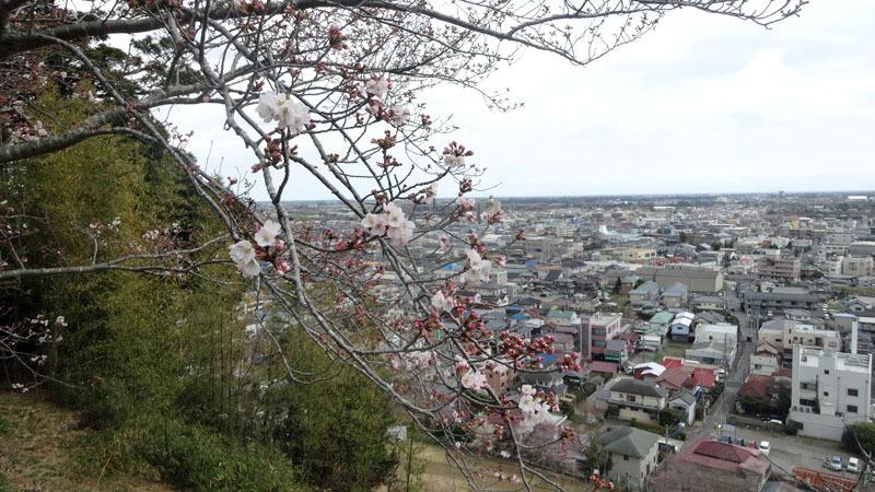 桜の花に心が弾む_b0114798_17055133.jpg