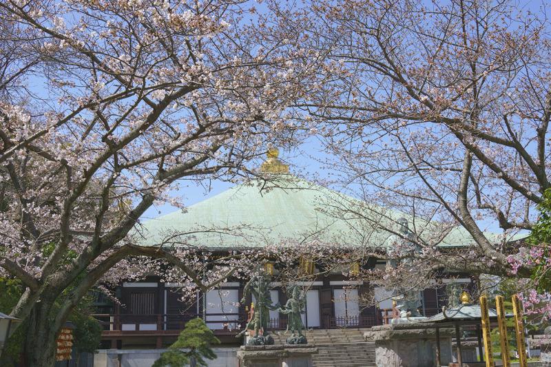 鎌倉桜めぐり_b0145398_22321821.jpg