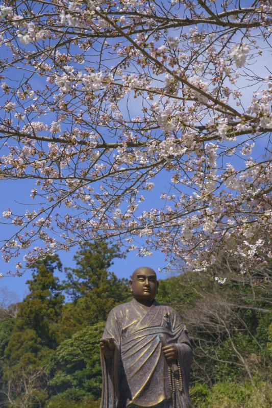 鎌倉桜めぐり_b0145398_22340315.jpg