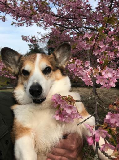 熱海の桜3種_f0101201_18563356.jpg