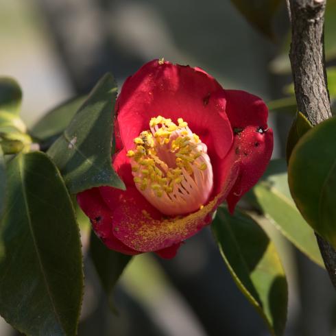 春が来た04_f0099102_12512801.jpg