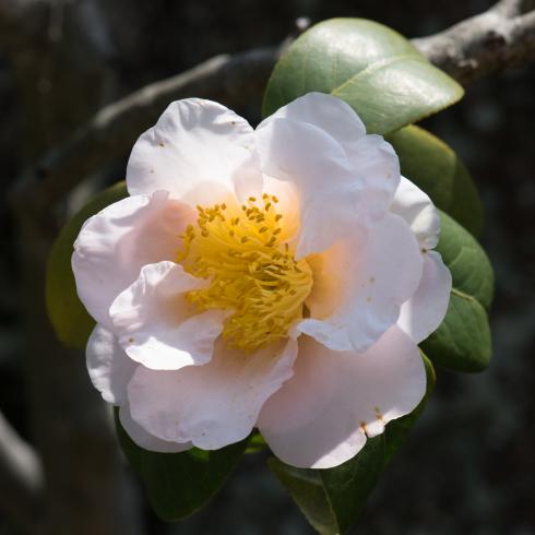 春が来た04_f0099102_12515779.jpg