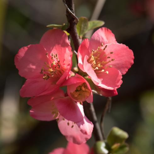 春が来た04_f0099102_12520968.jpg