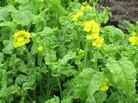 家庭菜園_a0138609_16205449.jpg