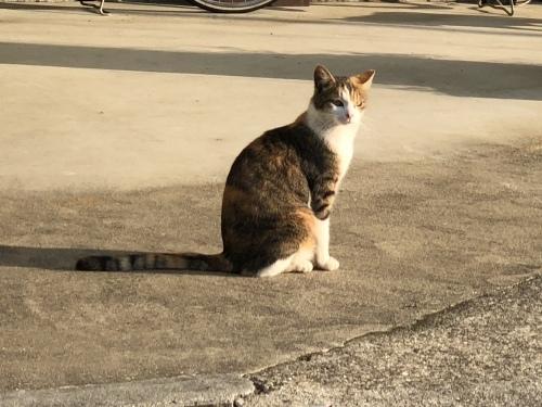 ご近所の猫さん_d0184114_08071950.jpeg