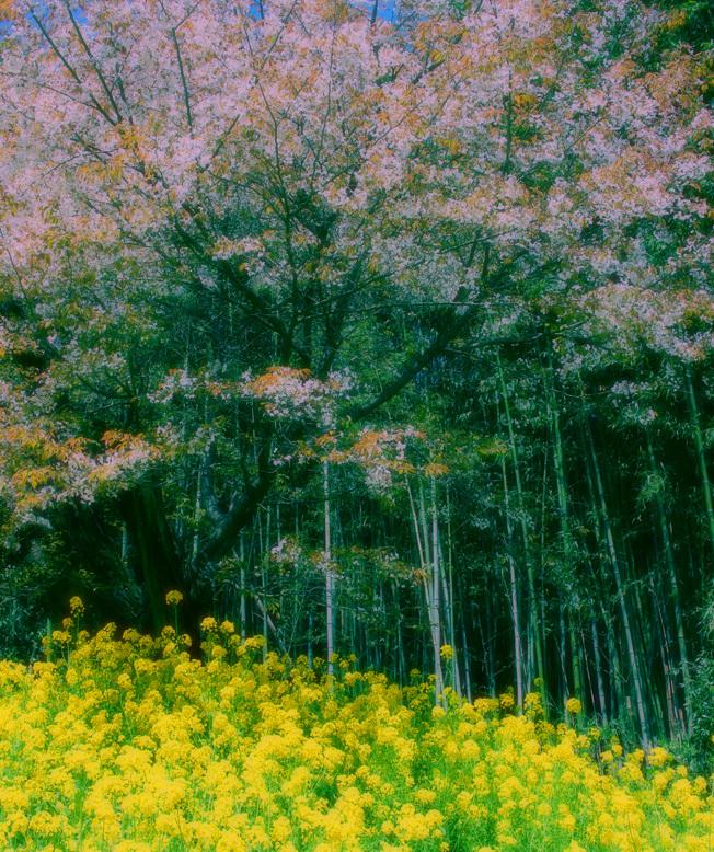 魚見桜(うおみざくら)_a0329820_12150524.jpg
