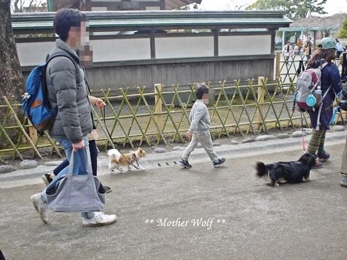 第24回マザーウルフ遠足 鎌倉天園レポート_e0191026_19512867.jpg