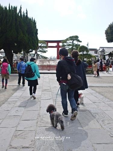 第24回マザーウルフ遠足 鎌倉天園レポート_e0191026_19581442.jpg