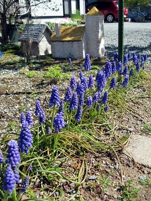 春です!_f0129726_18043188.jpg