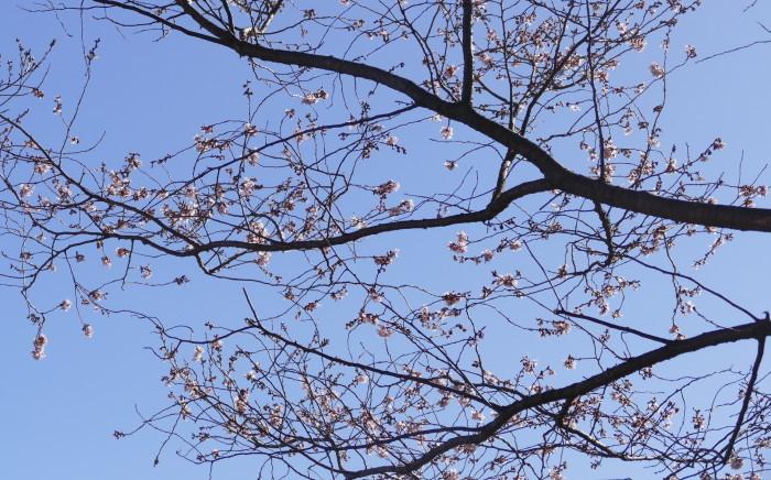 福島市渡利 「花見山の花」_d0106628_14530985.jpg