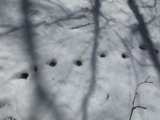 雪解け       3月24日_d0127634_11283596.jpg