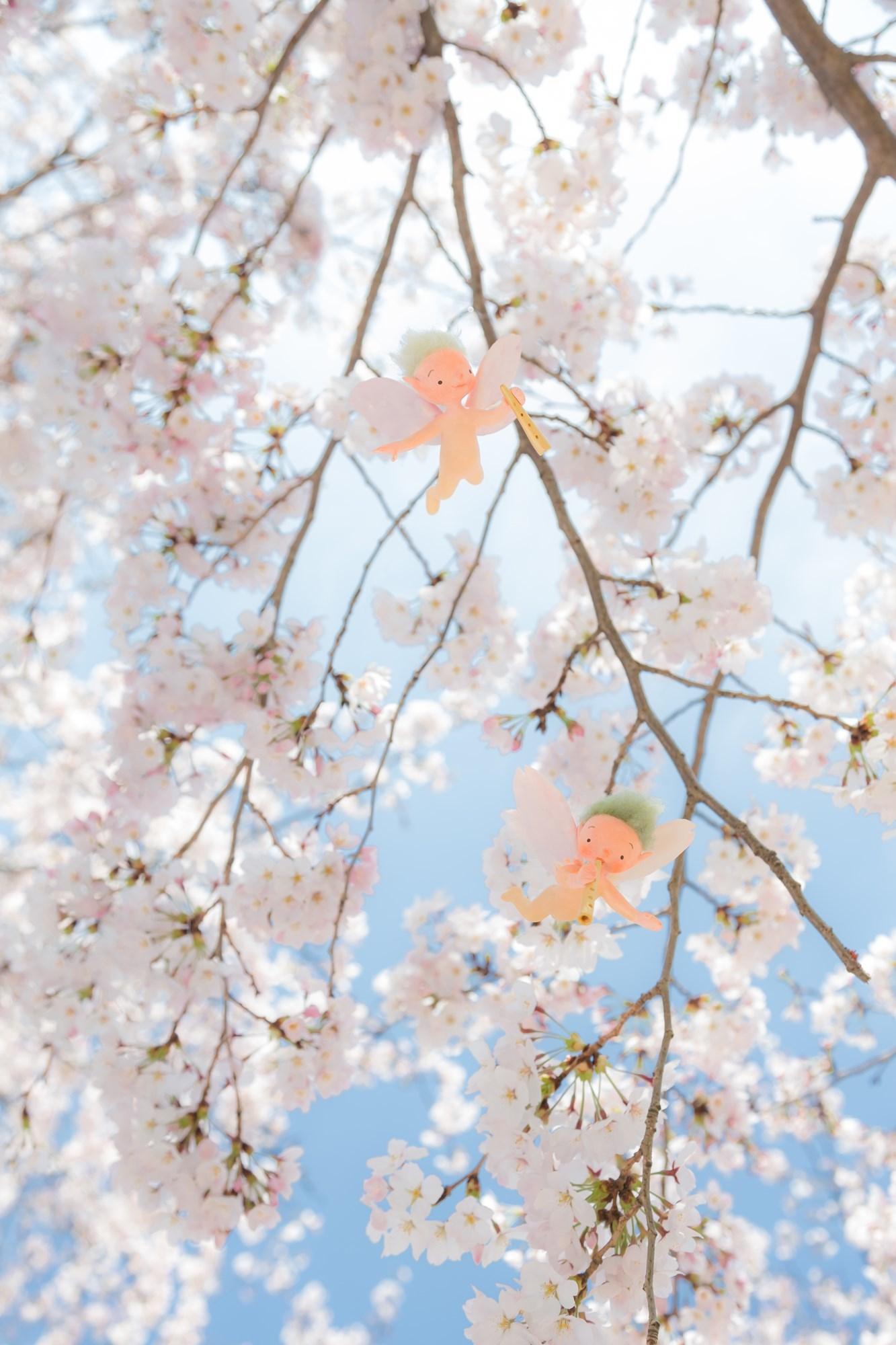 桜の妖精たち_f0395434_20344422.jpg