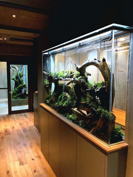 クリエイティブな空間に植物たちの息づかい_d0376039_18222348.jpg