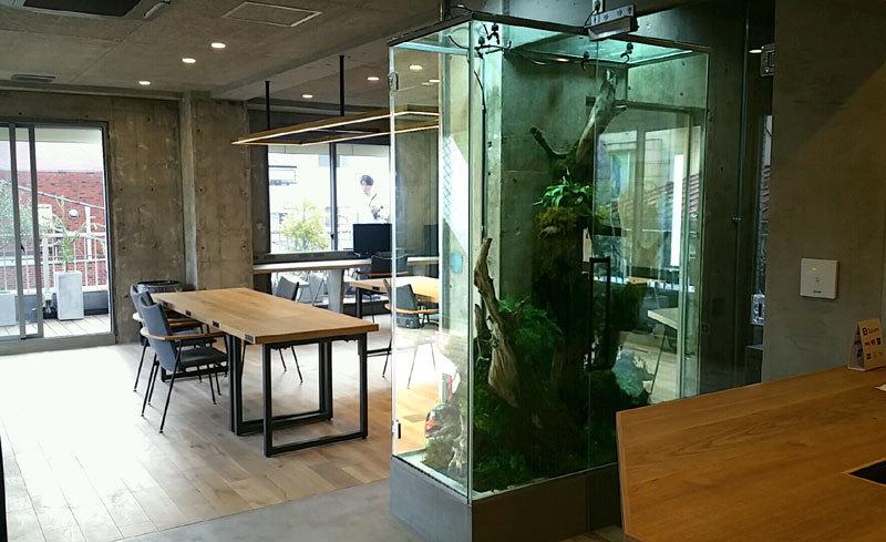 クリエイティブな空間に植物たちの息づかい_d0376039_18401047.jpg