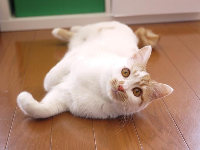 猫のお留守番 むぎちゃん編。_a0143140_23250528.jpg