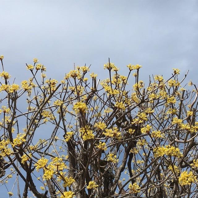 春の庭_e0226943_23030090.jpeg