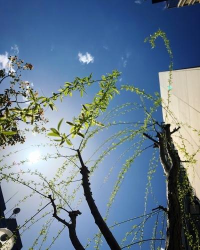 柳が風を教えている_e0071652_11392880.jpg