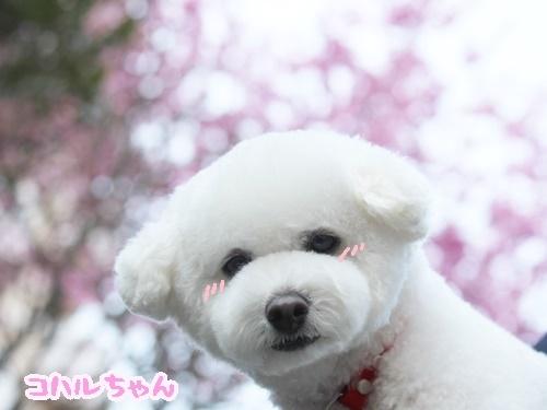 桜に注意!?_f0357682_16282281.jpg