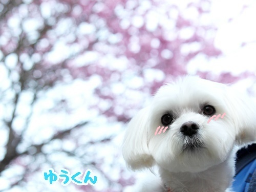 桜に注意!?_f0357682_16282578.jpg