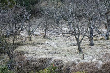 昨日の朝は霜がいっぱい_b0145296_13154407.jpg