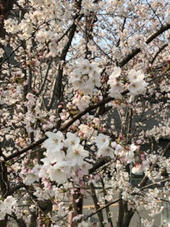第82回日本循環器学会学術総会_a0152501_16034980.jpg